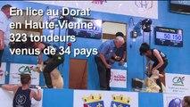 Les stars de la tonte de moutons font leur Mondial en France