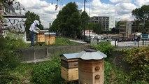 Bankacılıktan arıcılığa: Paris çatılarında şehrin en iyi balını üreten Türk
