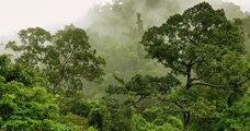 Planter des forêts serait « la meilleure solution face au réchauffement climatique », selon une étude