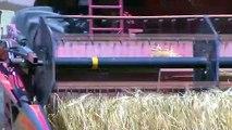 Moissons : inquiétude sur le blé.