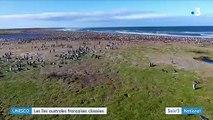 Les îles australes françaises classées à l'Unesco