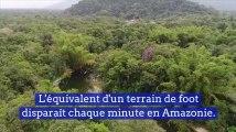 L'équivalent d'un terrain de foot disparaît chaque minute en Amazonie