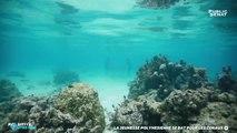 La jeunesse polynésienne se bat pour les coraux - Positive Outre-mer (04/07/2019)