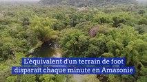 L'équivalent d'un terrain de foot disparait chaque minute en Amazonie