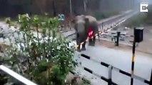 Cet éléphant soulève la barrière du passage à niveau et traverse la voie ferrée... même pas peur