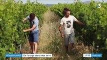Tendance : le vin orange, un vin de raisin rare à la robe orange