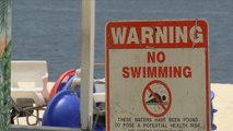 Toxic algae bloom plagues all of Mississippi's beaches
