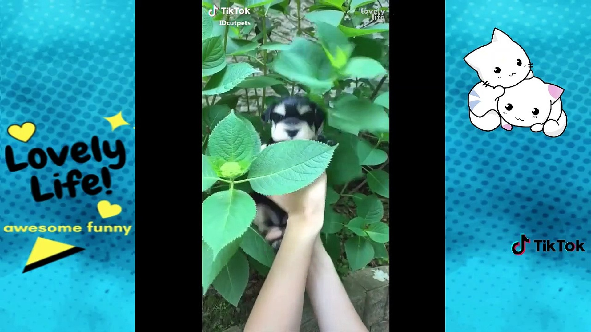 Awesome Pets on TikTok  Funny and Epic Pets Compilation  EP22  Lovely Life Vines
