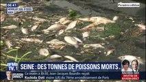 Plus de 3 tonnes de poissons morts dans la Seine après l'incendie d'une station d'épuration