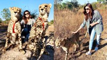 Kriti Sanon ENJOYS With Leopard and Friends In Zambia Full Trip