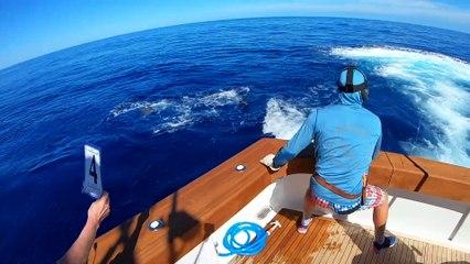 2019 Bermuda Billfish Blast Video