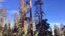 Ce bucheron coupe l'arbre.. et sa tronçonneuse !