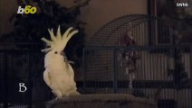 Bird Is The Word! Viral Dancing Bird Movements Could Have Deeper Meaning: Study