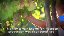 Italy's Prosecco hills receive UN world heritage status