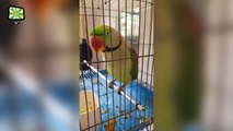 Amazing Parrots  Funny and Talented Birds (Part 1) [Epic Laughs]