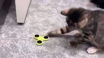 cat plays with fidget spinner