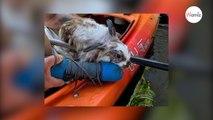 Ils font du kayak et voient une ombre dans l'eau : en s'approchant, ils découvrent l'impensable