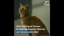 «Captain Marvel»: Les 3 raisons qui font de Goose le chat un super acteur