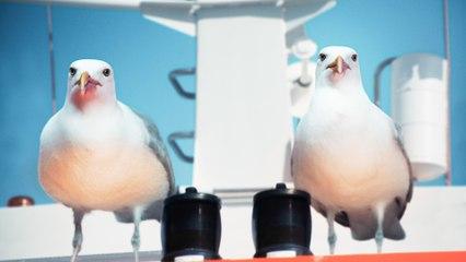 Ces mouettes ont des choses à vous dire sur les réseaux d'Orange