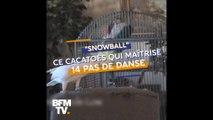 Le célèbre cacatoès Snowball maîtrise pas moins de 14 pas de danse