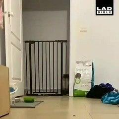 Cette chatte ne recule devant aucun obstacle. Admirez la !