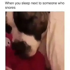 Quand un chat dort à coté d'un chien qui ronfle. Hilarant !