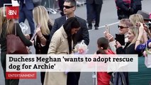 Prince Archie To Get A Best Friend