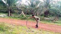 Un soldat dompte un serpent (Malaisie)