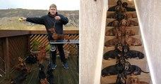 Un jeune homme a réussi à aligner ses 16 teckels par paires sur ses escaliers pour prendre une photo mémorable