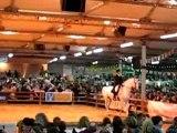 Bodega salon cheval passion Avignon