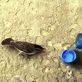 Il donne à boire à un oiseau assoiffé ! Adorable