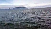 Une baleine fait un incroyable saut tout près d'un bateau de touristes