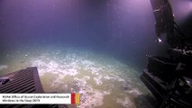 Deep-Sea Expedition Finds Methane Bubble Plumes Leaking From Ocean Floor
