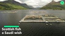 Pescado escocés importado a Arabia Saudita