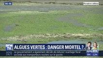 Les algues vertes sont-elles responsables de la mort d'un jeune ostréiculteur dans le Finistère?