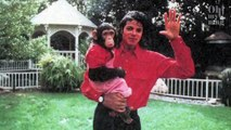 This Is What Happened To Michael Jackson's Pet Chimpanzee
