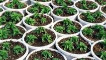 Caldo, basta condizionatori: ecco le piante che abbassano la temperatura in casa