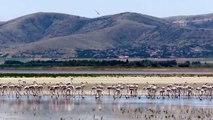 Seyfe Gölü'nde kuş yoğunluğu - KIRŞEHİR