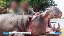 Rhône : les gérants d'un Super U démissionnent après avoir publié les photos d'un safari