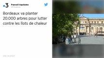 Bordeaux va planter 20000 arbres pour lutter contre les îlots de chaleur