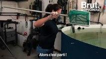 À La Rochelle, un centre de soins s'occupe de tortues échouées
