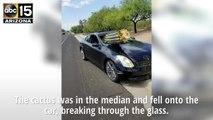 Cactus crashes into car in Tucson