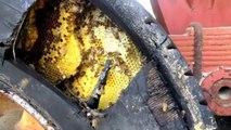 Ce qu'il découvre dans ce pneu de camion est incroyable : énorme nid d'abeille