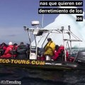 Turistas viajan para ver los icebergs que pronto van a desaparecer