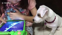 Adorable puppy just wants to play video games too