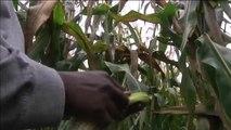 Togo, APPUI FINANCIER DU SECTEUR AGRICOLE