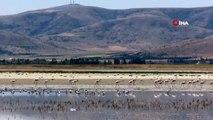 Yağışlar sonrası suyu çekilen Seyfe Gölünde kuş çeşitliliği yaşanıyor