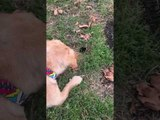 Curious Dog Stares at Gopher in Hole
