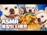 강아지 연어치킨타르트 리얼사운드 먹방!!
