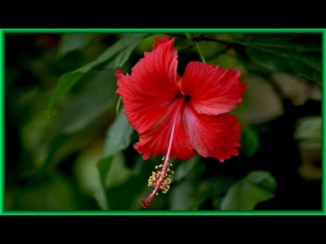 """Uthradappooviliyil Keralamunarukayai Superhit song from """"Poothalam"""" Album"""
